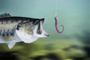 Worm-Bait-Fishing-300x200.jpg
