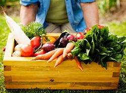 gardening veggies