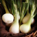 siskiyou sweet onions