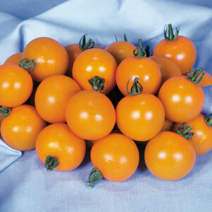 tomato sweet orange