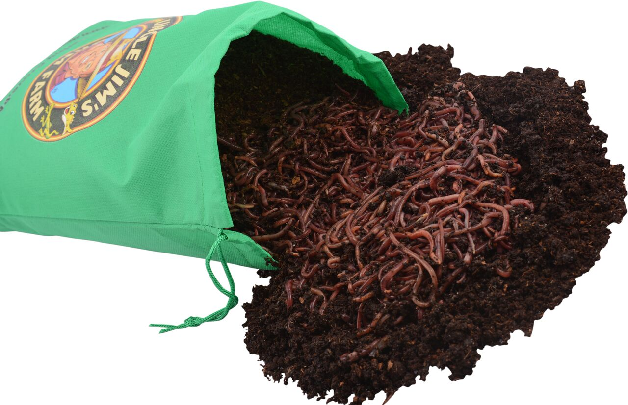 1000 Red Composting Worm Mix