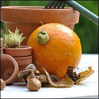 fall-composting