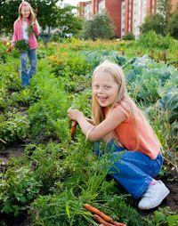 garden-compost