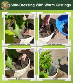 side-dressing-worm-castings