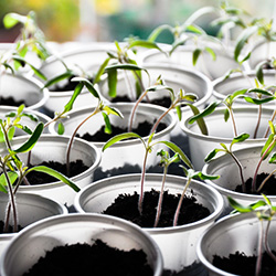 seed start pots