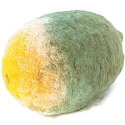 lemon spoiled foods
