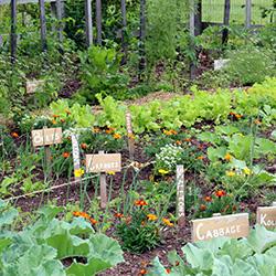 hot summer garden