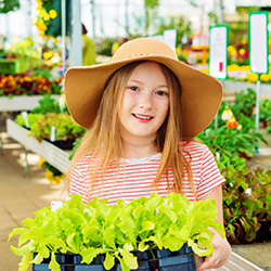 fertilize plants with vermicomposting
