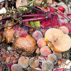 composting apples peaches garden scraps