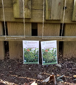 growing beans with compost